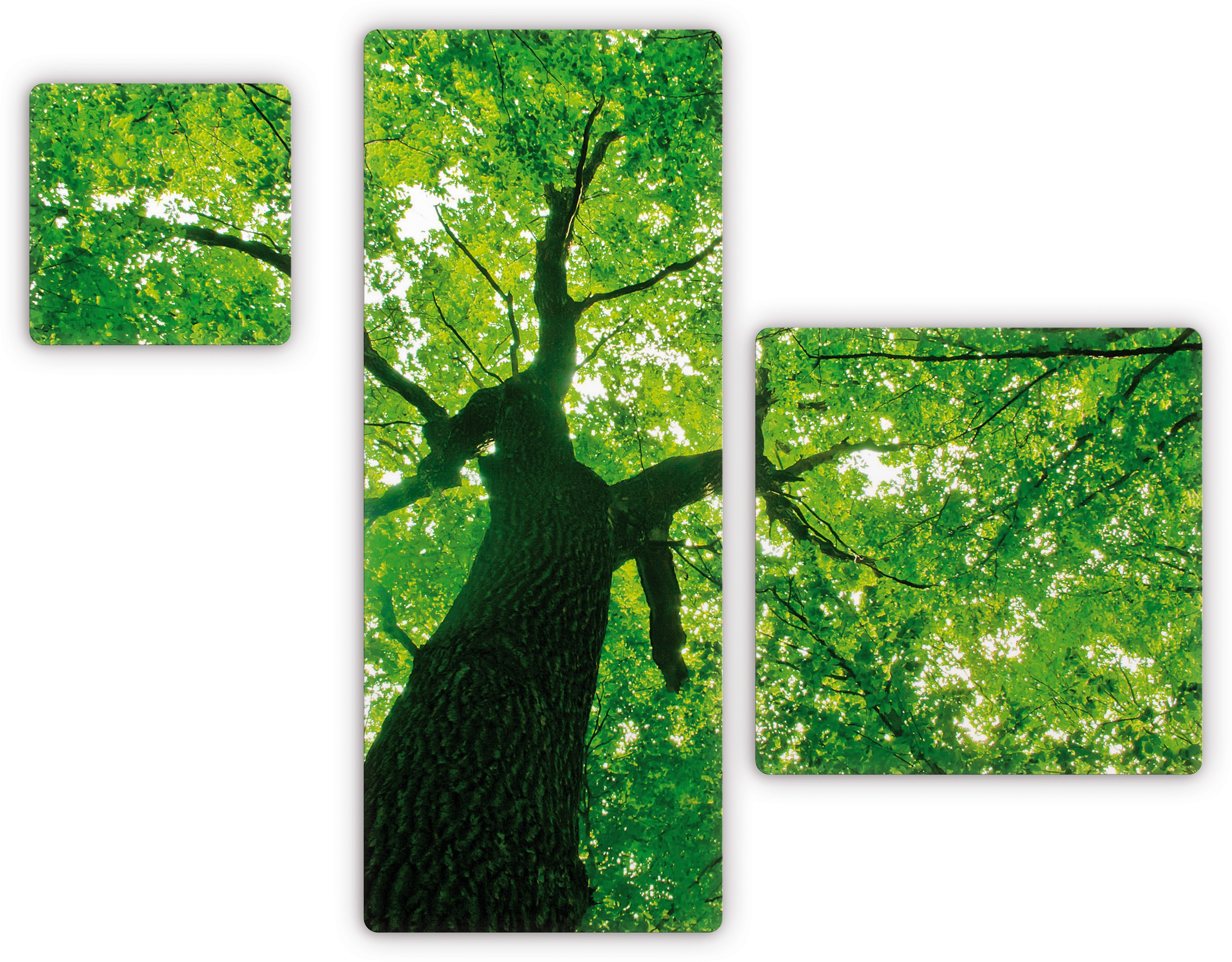 Premium Collection by Home affaier Glasbild »Under the Trees« (3-tlg.)