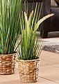 Home affaire Kunstpflanze »Gras«, Bild 6