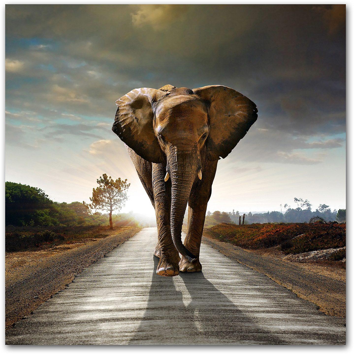 Premium collection by Home affaire Acrylglasbild »Elefant«, 50/50 cm