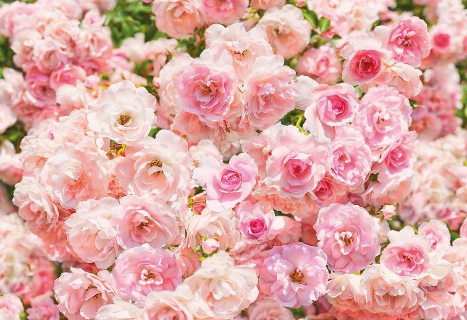 Fototapete, Komar, »Rosa«, 368/254 cm in rosa