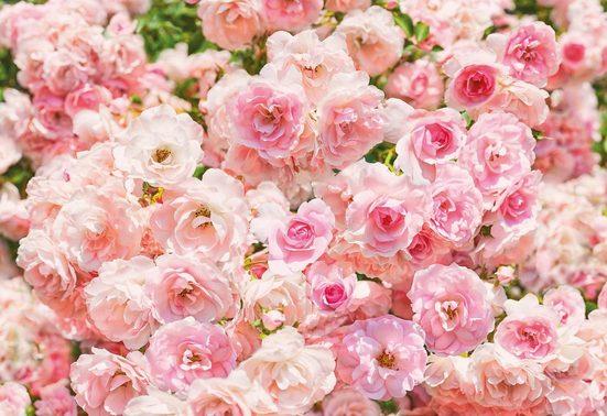 Fototapete »Rosa«
