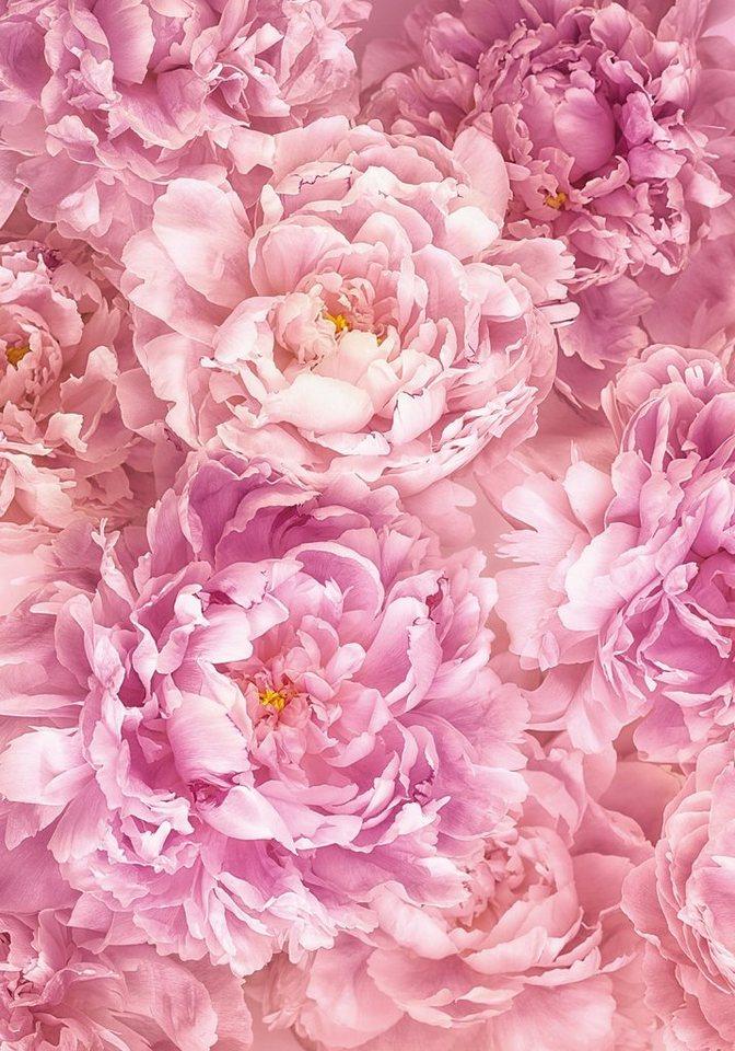 Большие красивые картинки 35 фото  Прикольные картинки
