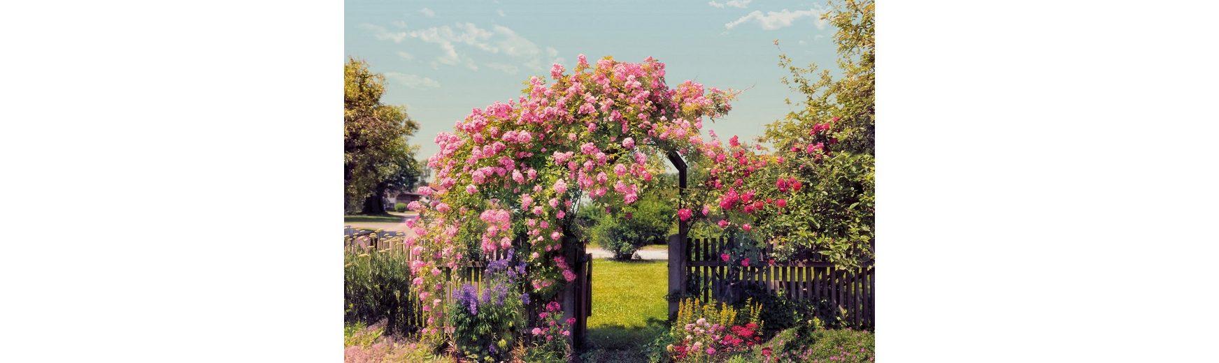 Fototapete, Komar, »Rosen Garden«, 368/254 cm