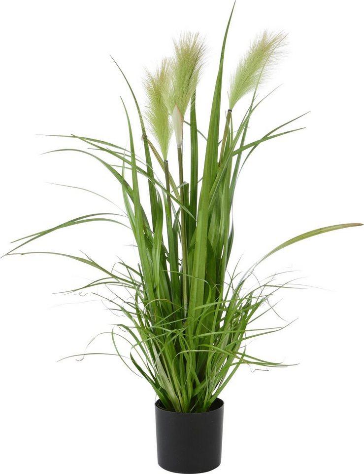 Kunstpflanze, Home affaire, »Riedgras« in grün
