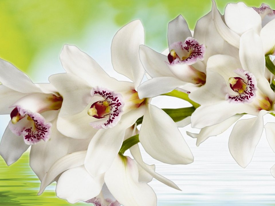 Leinwandbild auf Holzrahmen, Home affaire, »Weiße Orchidee«, 80/60 cm in Weiß