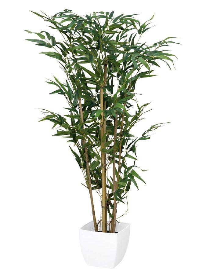 Bambus in grün
