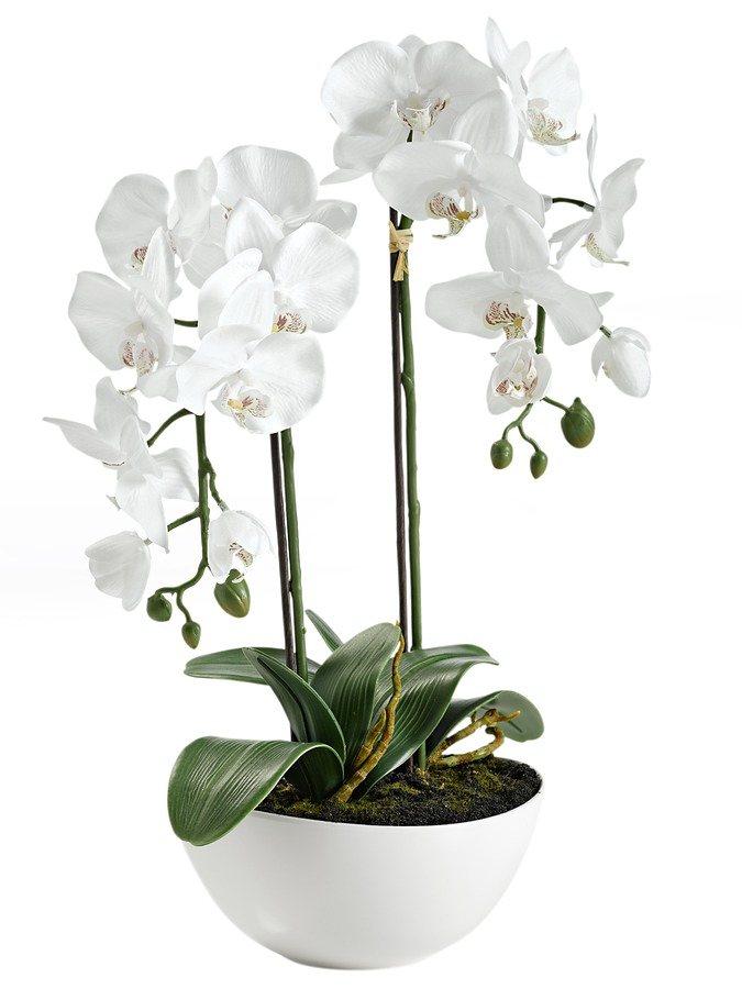 heine home orchidee  schale sieht taeuschend echt aus