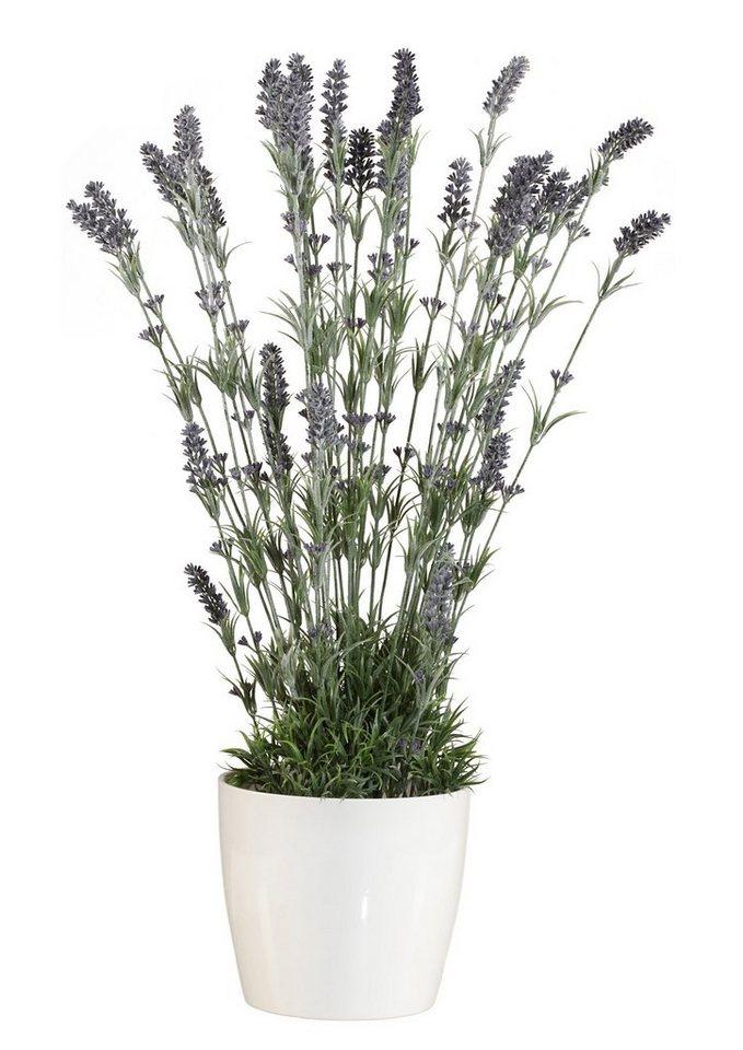 Home affaire Kunstpflanze »Lavendel« in grün