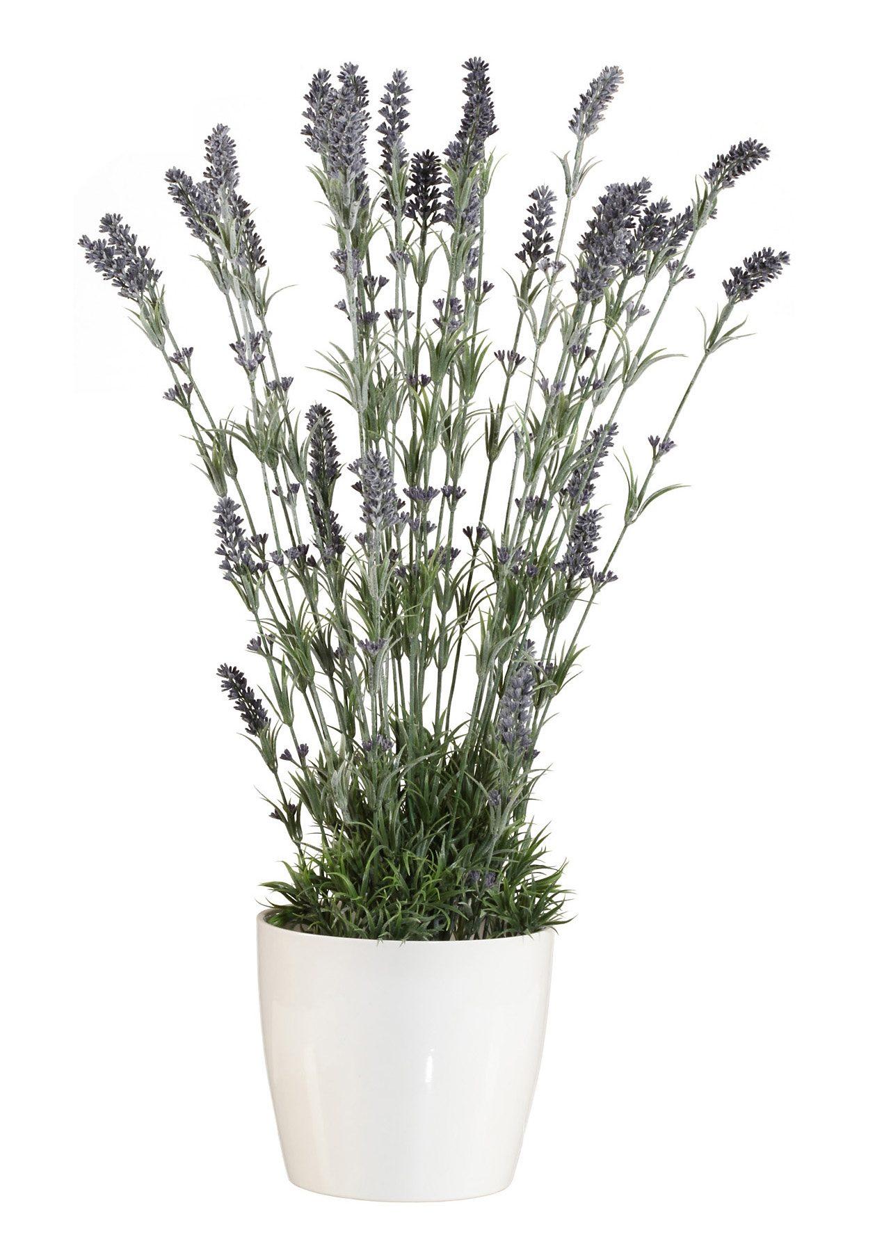 Home affaire Kunstpflanze »Lavendel«