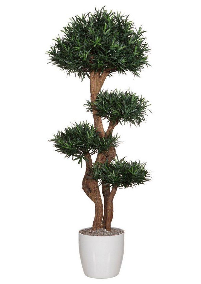 Premium collection by Home affaire Kunstpflanze »Podocarpusbaum« in grün