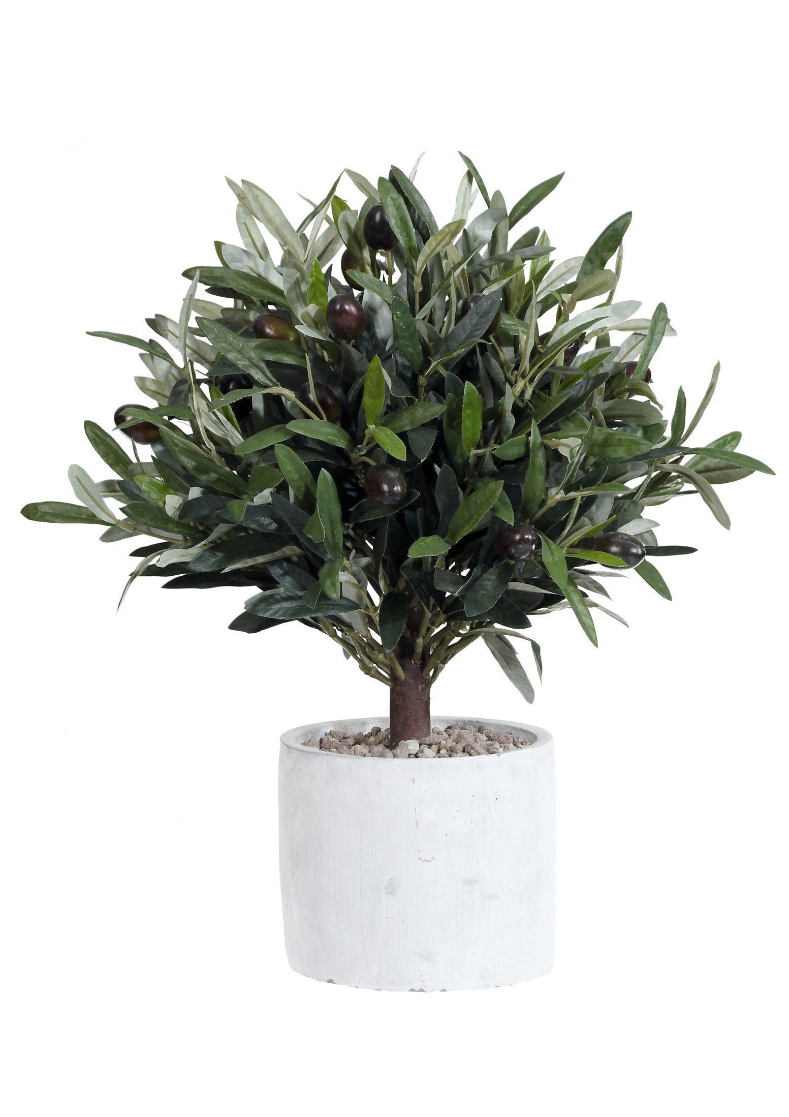 Home affaire Kunstpflanze »Olivenbaum«