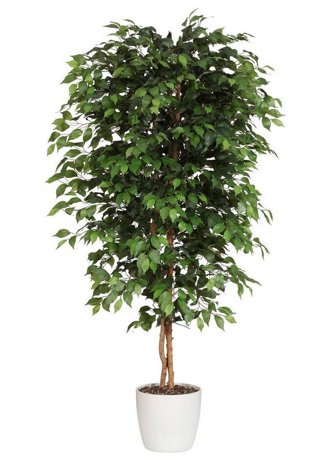Ficus Benjamini Kaufen : premium collection by home affaire kunstpflanze ficus benjamini online kaufen otto ~ A.2002-acura-tl-radio.info Haus und Dekorationen