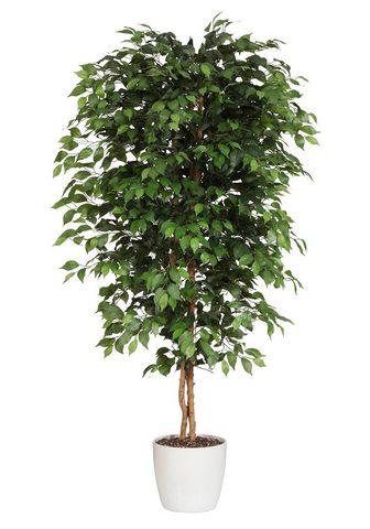 PREMIUM COLLECTION BY HOME AFFAIRE Dirbtinis augalas »Ficus Benjamini«