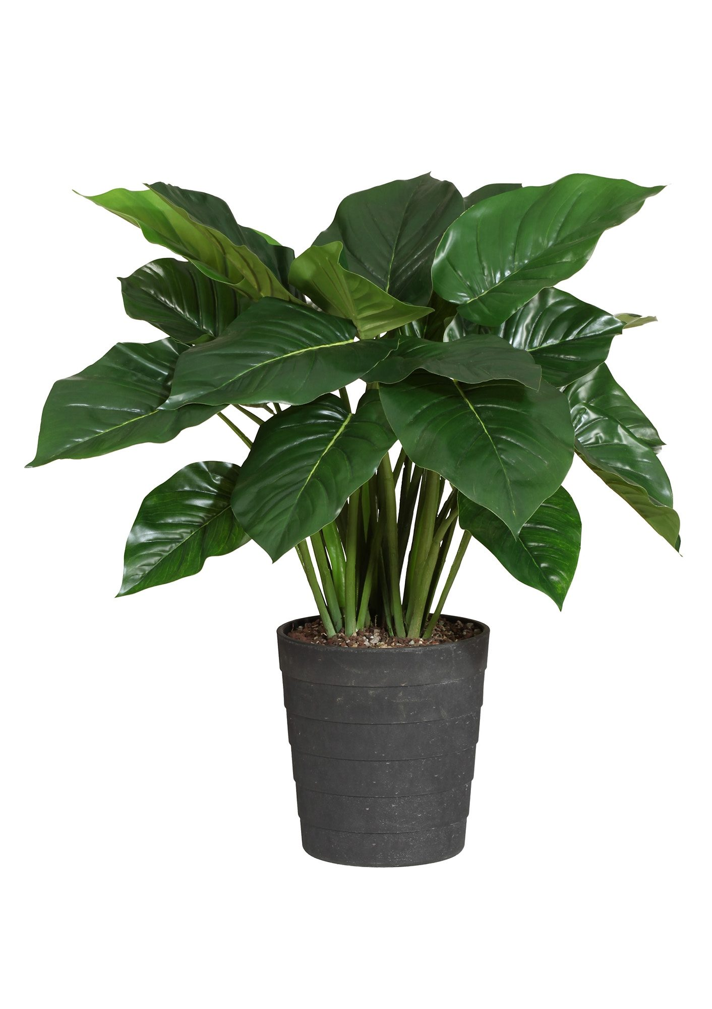 Home affaire Kunstpflanze »Philodendron«