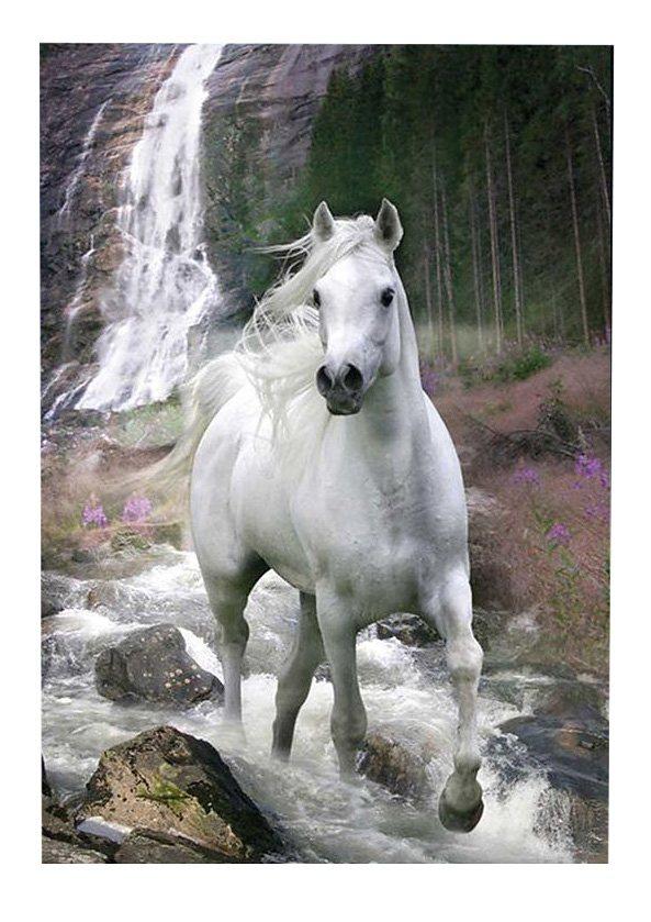 Wandbild, »Weißes Pferd«, Premium Picture in weiß