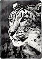 Wohndecke »Leopard«, BIEDERLACK, mit Leopardenmotiv, Bild 1