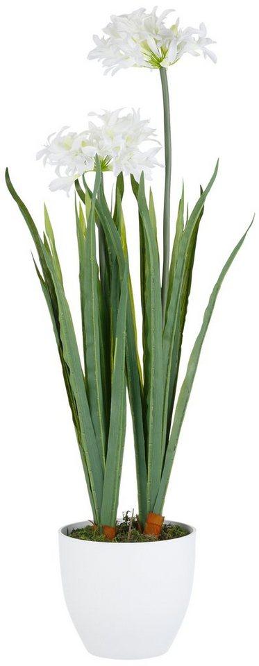 Home affaire Kunstblume »Agapanthus mit 2 oder 3 Blüten« in weiß
