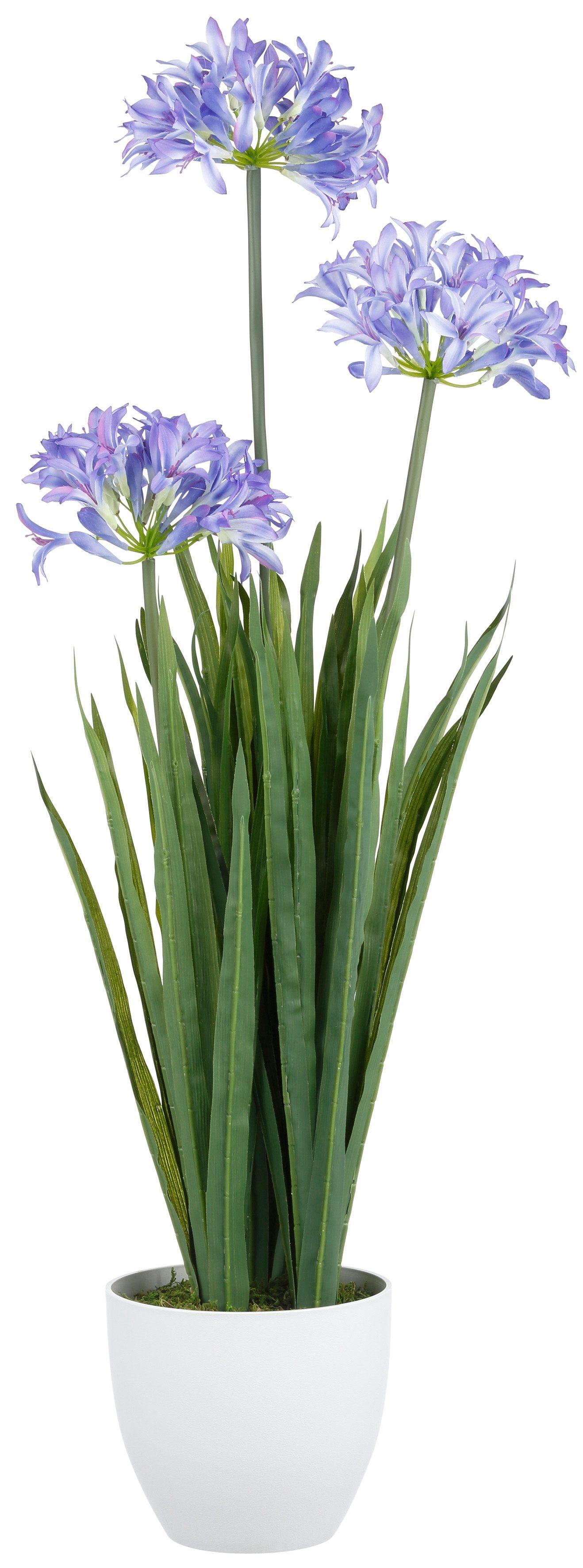 Home affaire Kunstblume »Agapanthus mit 2 oder 3 Blüten«