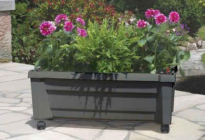 Pflanzkübel & Blumenkübel online kaufen | OTTO