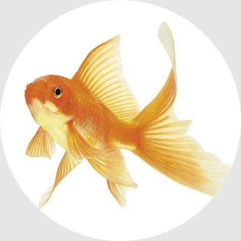 Abfluss-Stöpsel, Wenko, »Pluggy XL Fish«