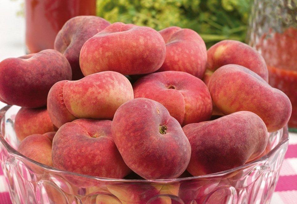 Obstbaum »Tellerpfirsich Sugar Baby®« in rosa