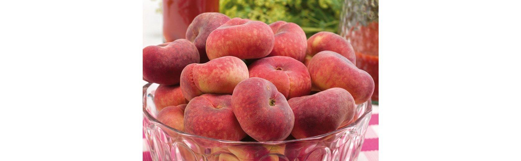 Obstbaum »Tellerpfirsich Sugar Baby®«