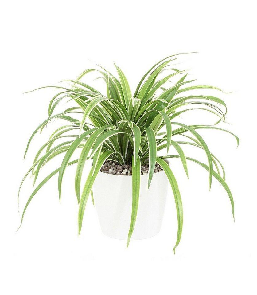 kunstpflanze dracenabusch h 50 cm kaufen otto. Black Bedroom Furniture Sets. Home Design Ideas