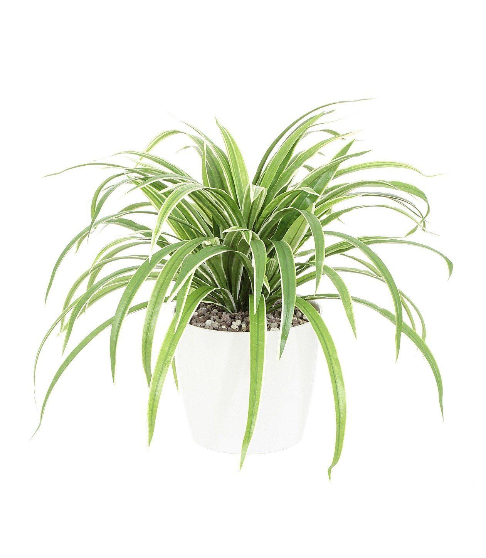 Kunstpflanze »Dracenabusch«, H: 50 cm