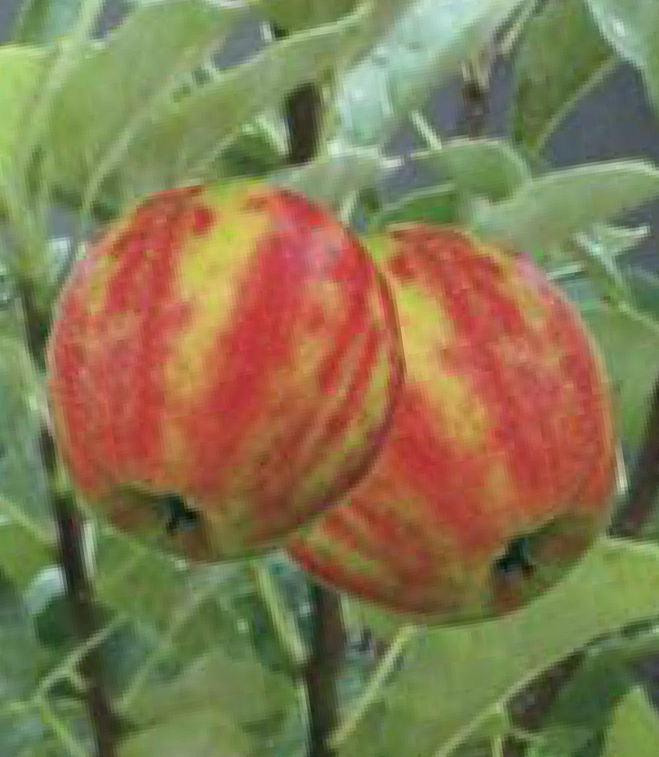 Obstbaum »Apfel Karneval«