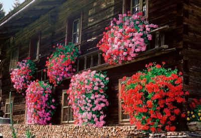 Balkonpflanzen Balkonblumen Online Kaufen Otto