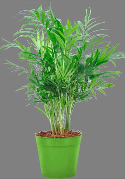 Grune Zimmerpflanzen Online Kaufen Otto