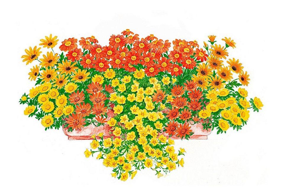Pflanzenset »Sonnige Farben« in bunt
