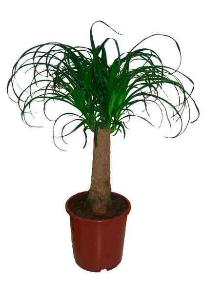 Comeback der zimmerpflanzen pflegeleicht und bl hend - Tolle zimmerpflanzen ...