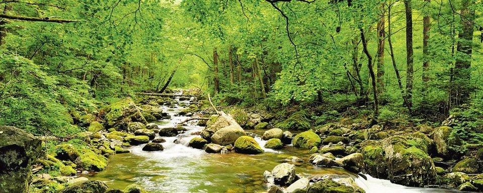 Glasbild, Home affaire, »tupikov: Herbstwald, Fluß Smolny«, 125/50 cm in Grün
