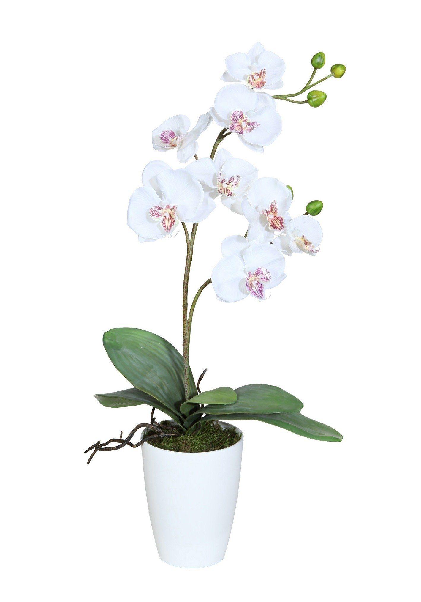Kunstpflanze »Orchidee«, H: 65 cm