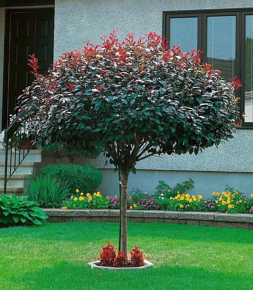 Gartenbaum Kaufen