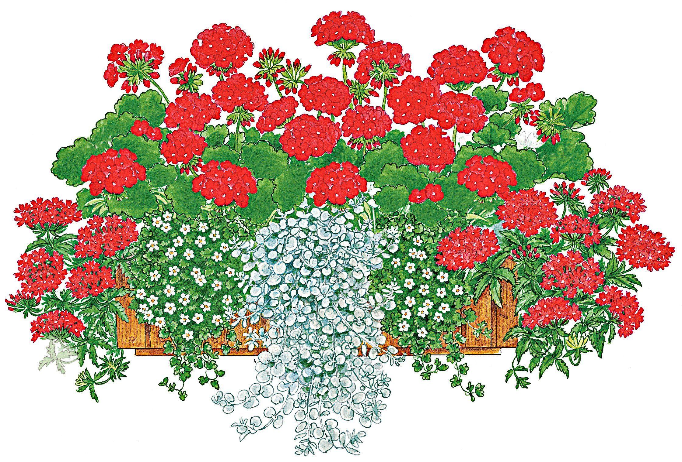 Balkonpflanzen-Set »Farbfeuer«