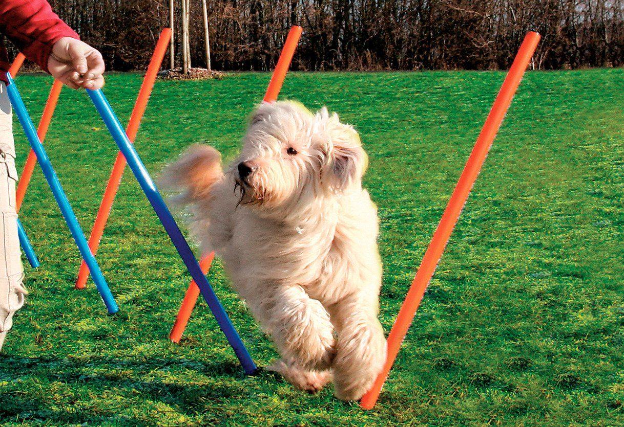 Hunde-Slalomstäbe »Dog Agility Slalom«