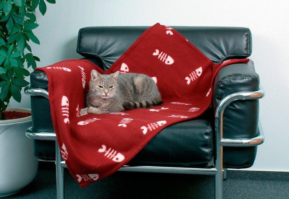 Hundedecke und Katzendecke »Barney/Beany« in bordeaux-rot