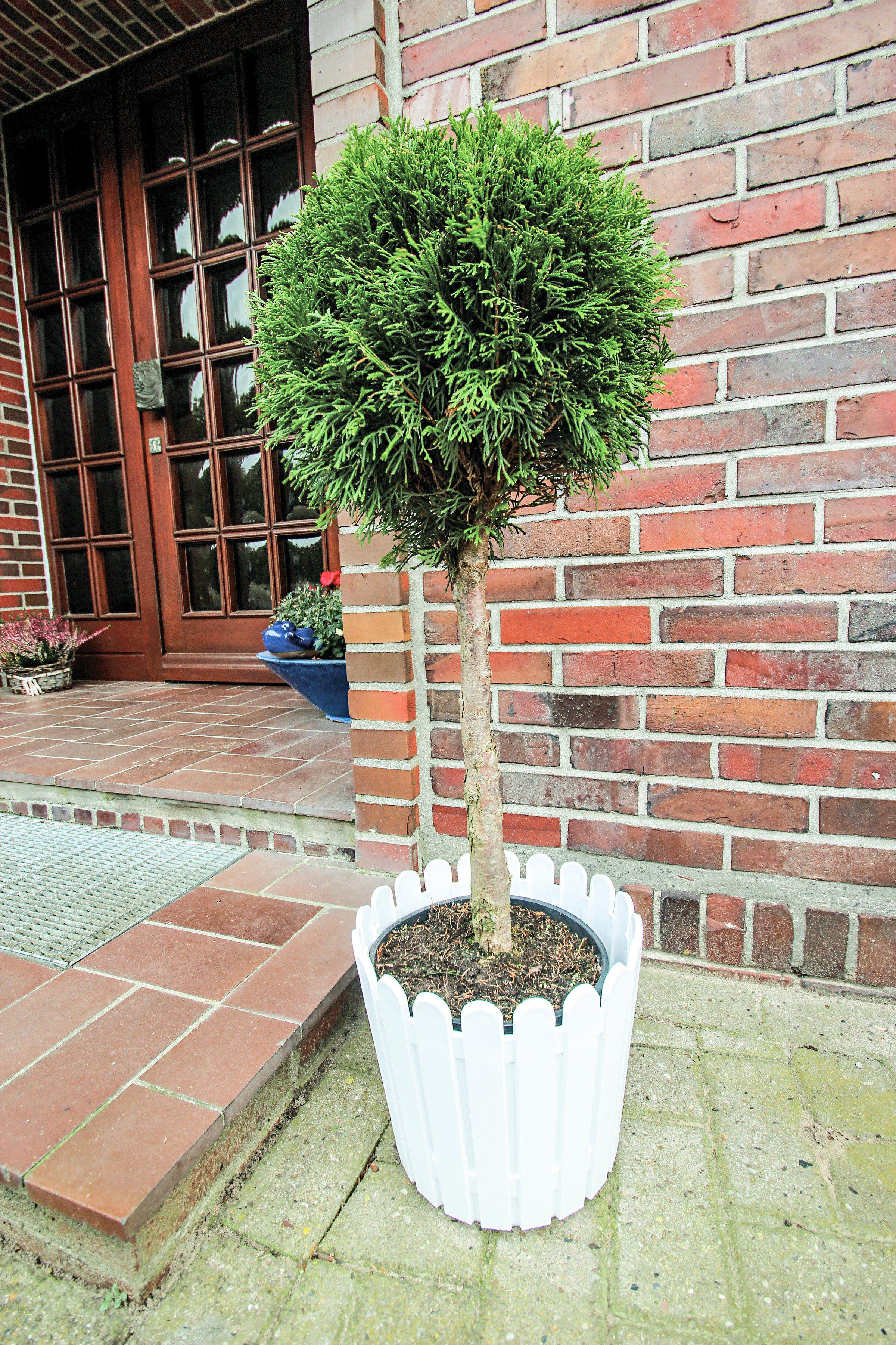 Lebensbaum »Smaragd Stämmchen«