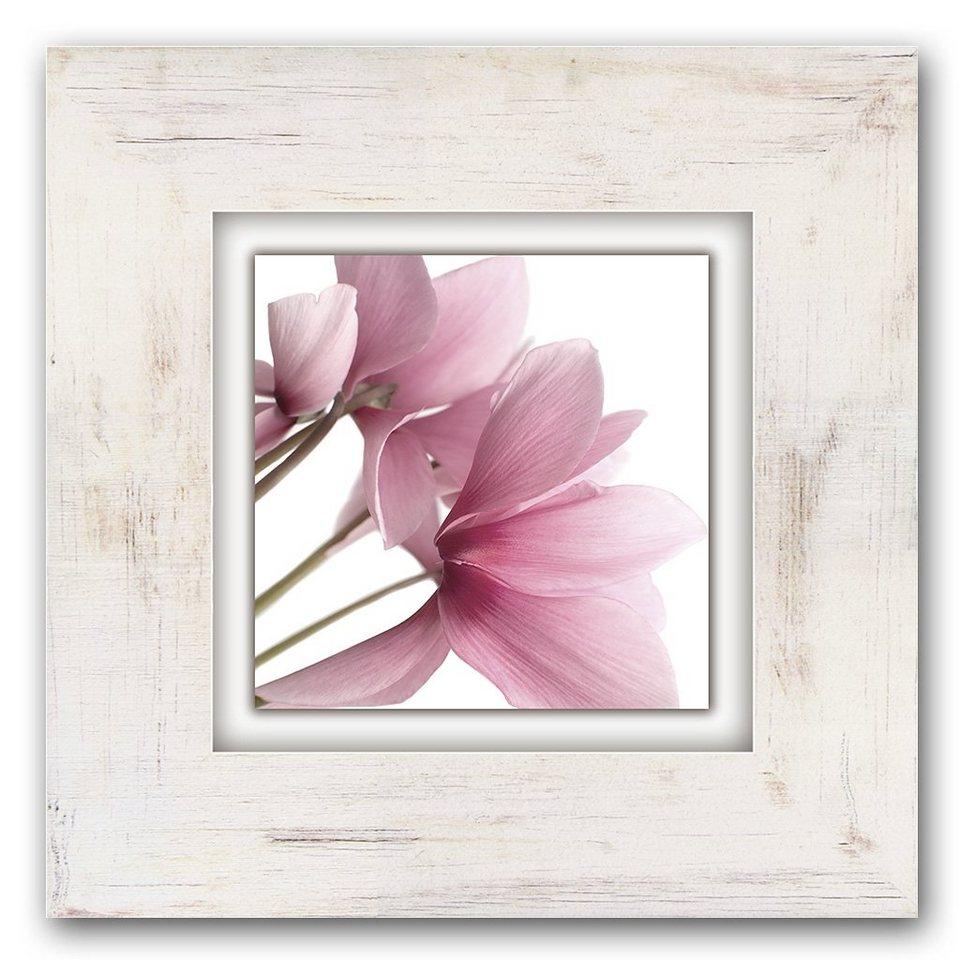 Holzbild, Home affaire, »Rosa Veilchen«, 40/40 cm in beige/rosa