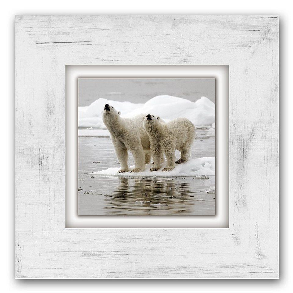 Holzbild, Home affaire, »Eisbären«, 40/40 cm in weiß