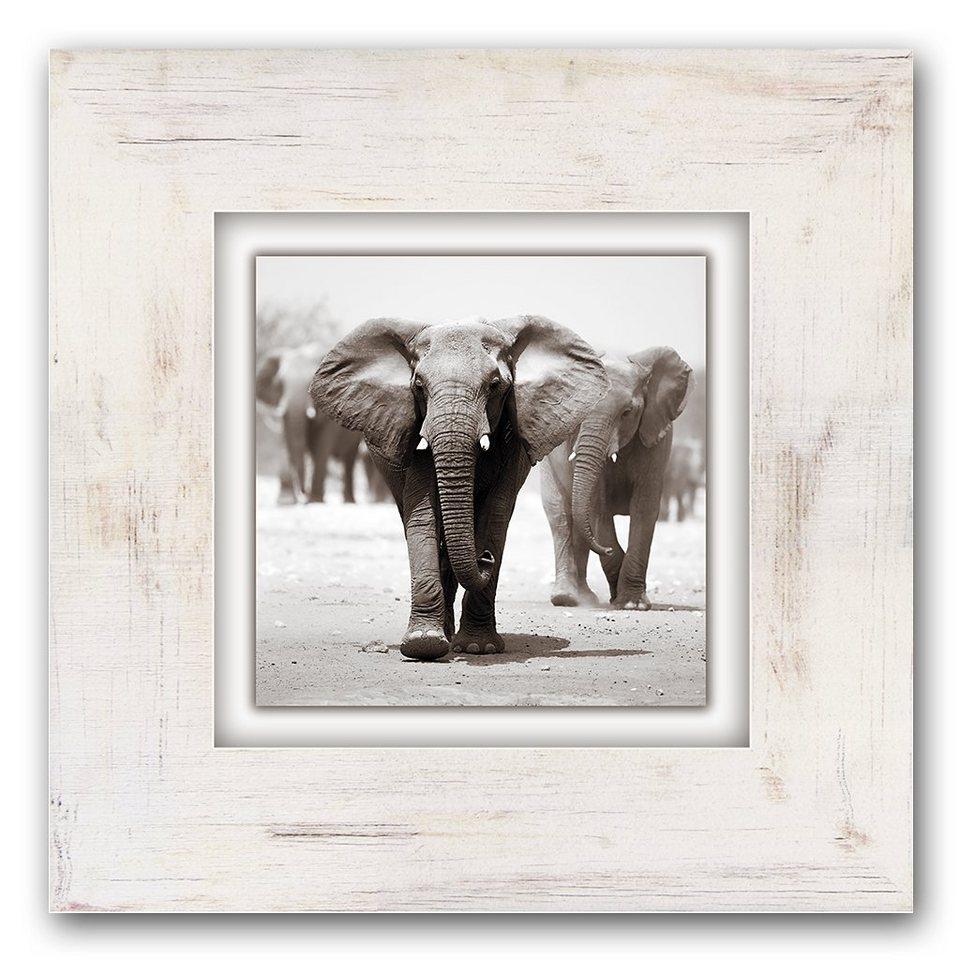 Holzbild, Home affaire, »Elefanten«, 40/40 cm in grau/weiß