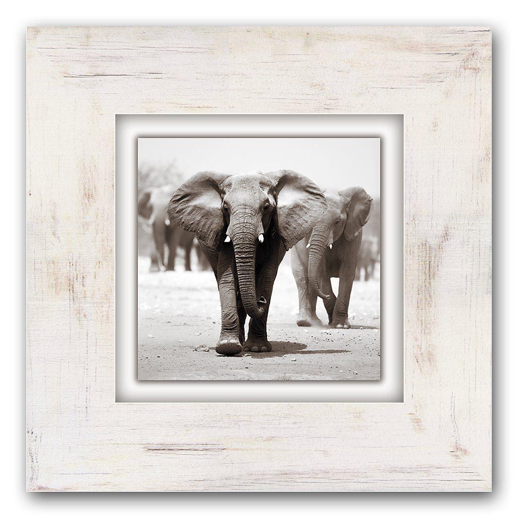 Holzbild, Home affaire, »Elefanten«, 40/40 cm