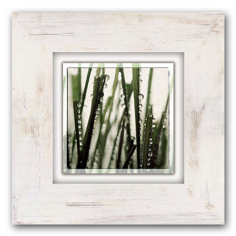 Holzbild, Home affaire, »Grasstängel«, 40/40 cm in beige/grün