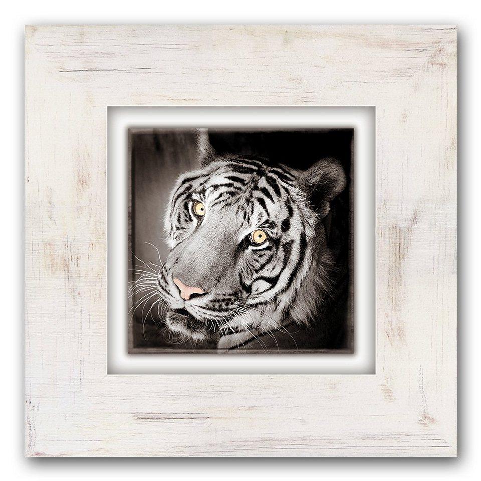 Holzbild, Home affaire, »Tigerkopf«, 40/40 cm in beige/grau