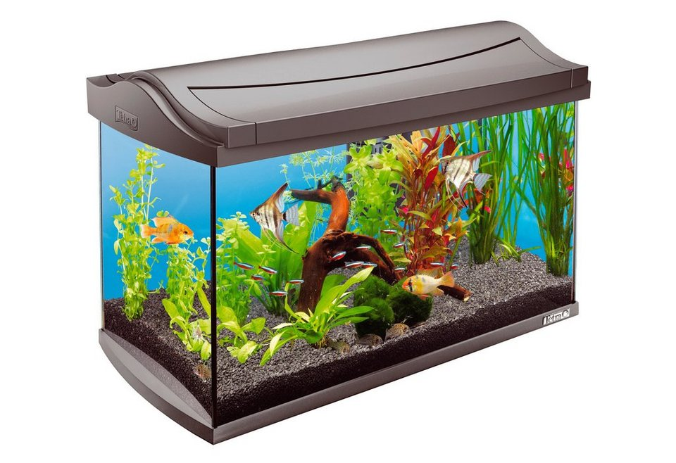 Aquarium »Tetra Tropical« 60 l, anthrazit in anthrazit