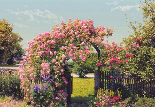 Komar Fototapete, Rosen Garden, 368/254 cm