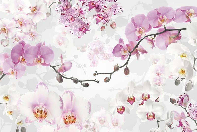 Vliestapete, Komar, »Allure«, 368/248 cm in rosa/weiss