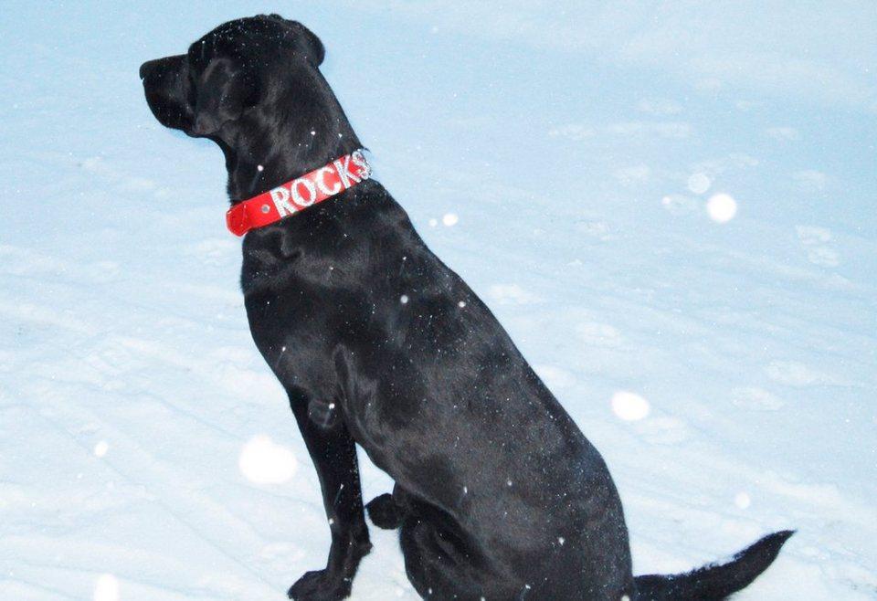 Hundehalsband »Rockstar« in rot